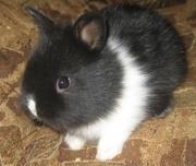 карликовые крольчата разных окрасов и пород